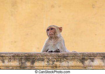 little monkey sitting on wall of old building