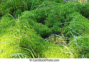 Little mossy swamp