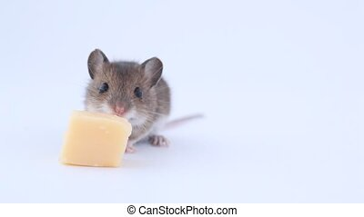 Little mouse eating