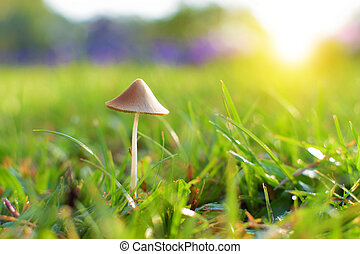 Little Mushroom on Grass