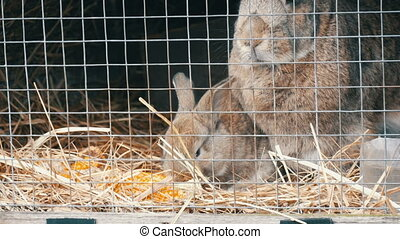 Little newly born rabbit eat in cage - Little newly born...