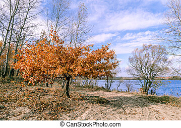 Little Orange Oak Tree Close to the River, in Autumn