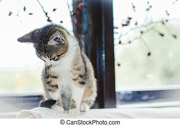little pet cat