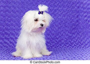 little pet dog