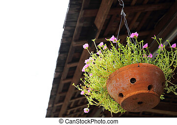 little pink flower in clay pot hanging on the roof