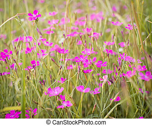 Little pink flowers in green grass