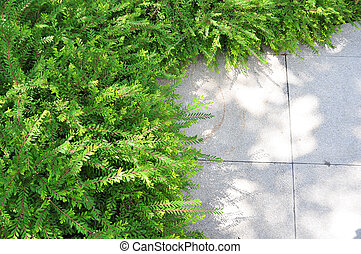 Little plant in garden