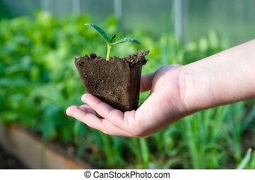 Little plant sprout in organic cup ready to be planted in green