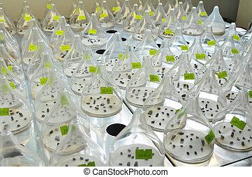 genetic engineering - little plants in vitro genetic ...