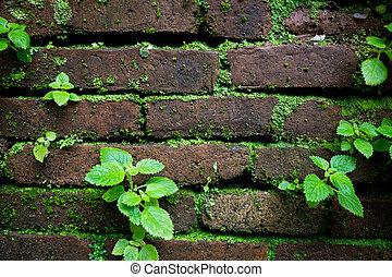plants on brick wall