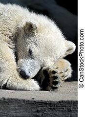 Little polar bear cub having a rest