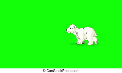 Little Polar Teddy Bear Walks Chroma - Little Polar Teddy...
