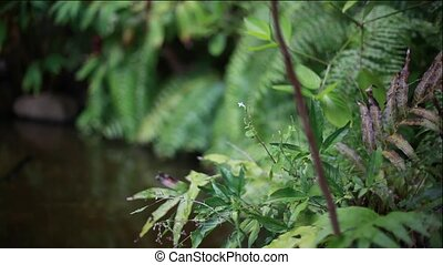 Little pond in beautiful tropical jungle and exotic plants....