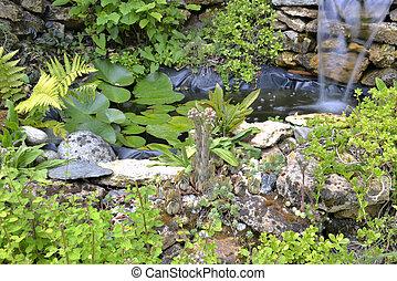 little ponf with succulent plants