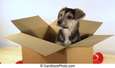 Little puppy dog sits in a postage box with red ribbon.