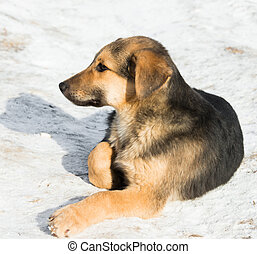 little puppy in the snow - one melenko without purebred...