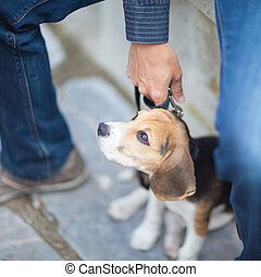 Little puppy on a leash.