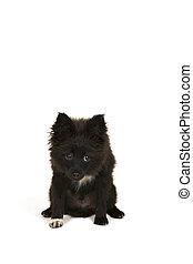 Little puppy on white background