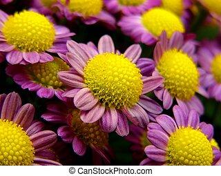 little purples