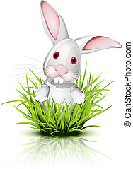 Little rabbit  on grass