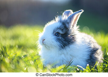 Little rabbit on green grass in spring day