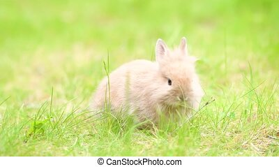 Little rabbit on green grass in summer day. Little easter bunny in the meadow.