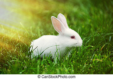 Little  rabbit on the field in summer