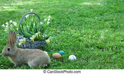 Little rabbit sitting at the basket - Cute rabbit sitting at...