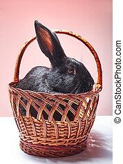 Little rabbit sitting in a basket