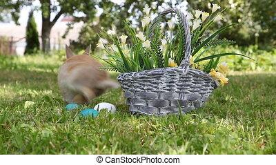 Little rabbit sitting in the basket