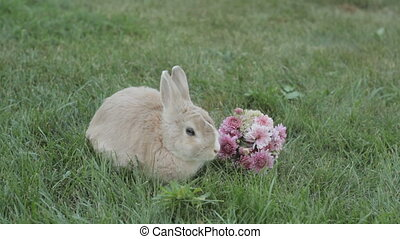 little rabbit sitting on the grass near a bouquet of flowers