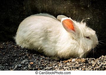 Little Rabbit - Little rabbit on the gravel ground.