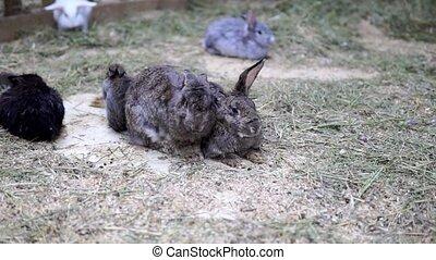 little rabbits. Easter dwarf decorative fluffy rabbit. Symbol of Easter.
