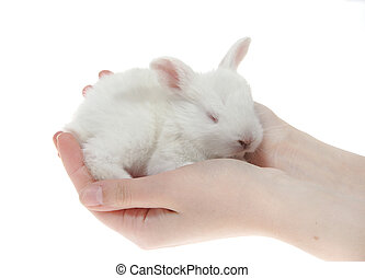little rabbits in the hands