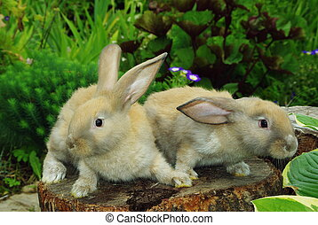 Little rabbits on the stump - Little rabbits sitting on the ...