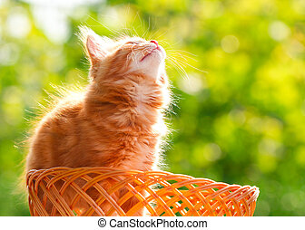 Little red cat in a wicker basket on green background outdoors