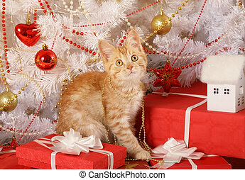 Little red-haired kitten sitting under the Christmas tree ...