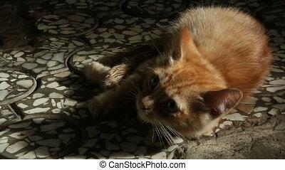 Little red-haired kitten.