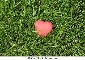 Little red heart lying on green grass - The red heart lying...
