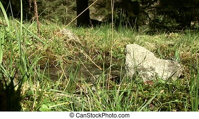Little River in Alps Of Austria
