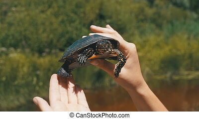 Little River Turtle in Female Hands on a Background of the River. Slow Motion