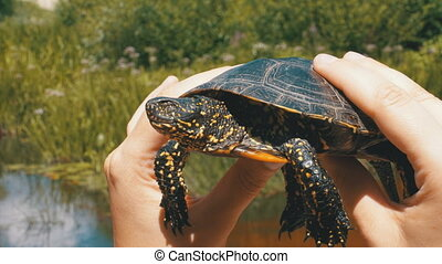 Little River Turtle in Female Hands on a Background of the River