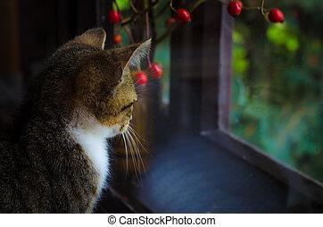 little sad cat