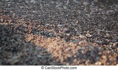 Little sea shells on sand, Sea waves on beach