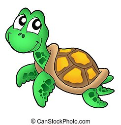 Little sea turtle