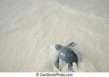 Little sea turtle on sandy beach
