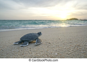 Little sea turtle on the sandy beach in morning