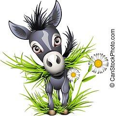 Little shaggy grey donkey eating grass