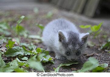 Little Shy Kitten