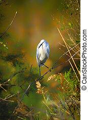 Little silver egret (Egretta garzetta) standing in wild nature